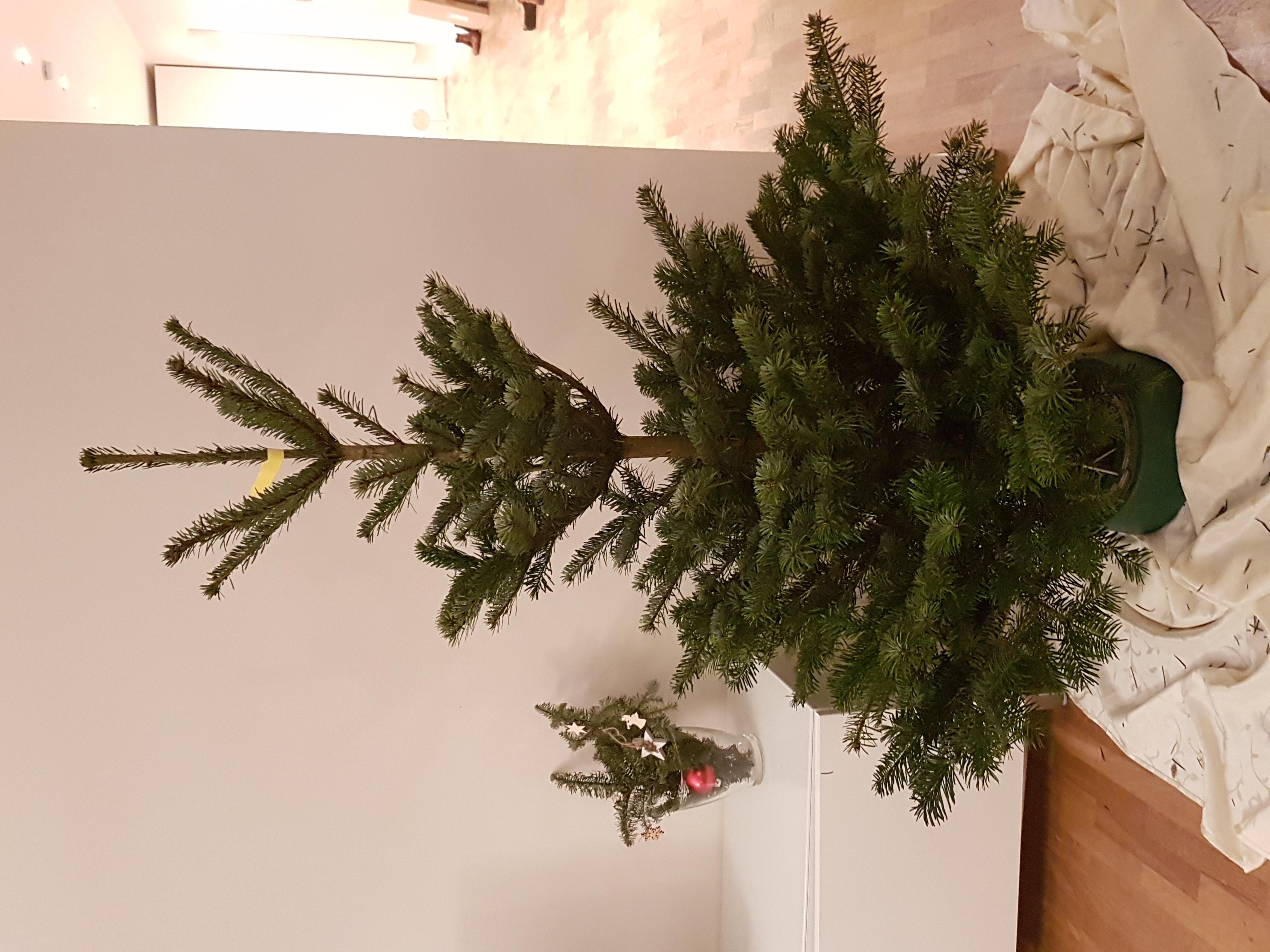 In Diesem Sinne Frohe Weihnachten.Fröhliche Weihnacht überall Tönt Es Durch Die Lüfte Froher Schall